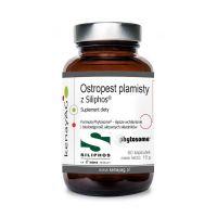 Ostropest plamisty Siliphos - Sylibina z ekstraktu z owoców ostropestu z Lecytyną sojową i Fosfolipidy (60 kaps.) KenayAG