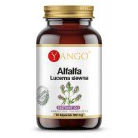 Alfalfa - Lucerna Siewna ekstrakt 10:1 (60 kaps.) Yango