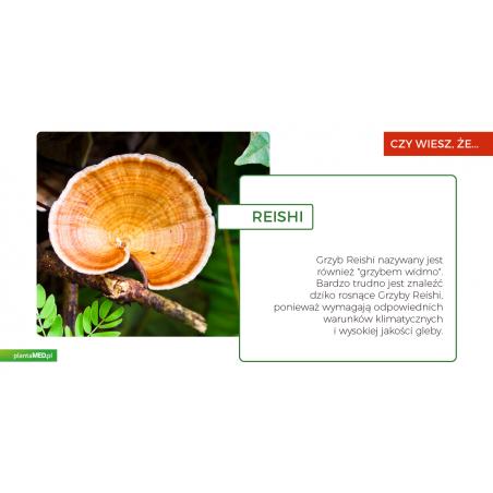 Organiczne zarodniki grzybów Reishi (90 kaps.) Aloha Medicinals Inc.