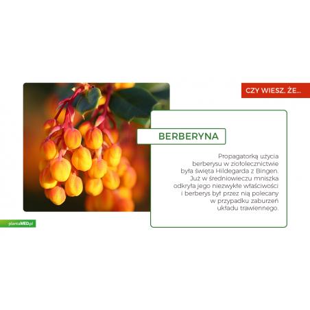 Berberyna 500 mg (60 kaps.) Maypro