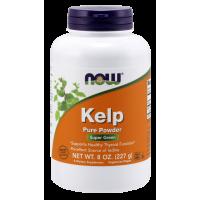 Kelp (naturalny Jod) - Morszczyn Pęcherzykowaty proszek (227 g) NOW Foods